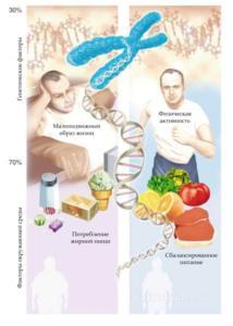 Физиопатология жирового обмена