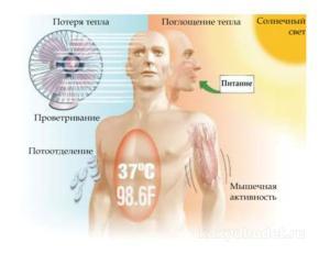 Термогенный эффект пищи