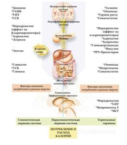 Похудение при нормальном питании