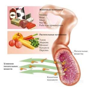 Усвоение питательных веществ