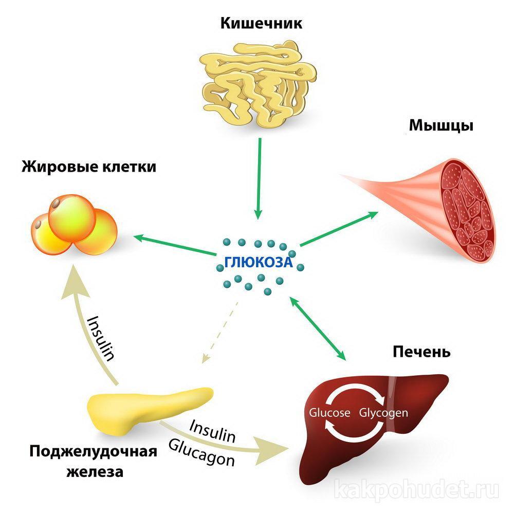 Смертельный вред фруктозы и сахарозы