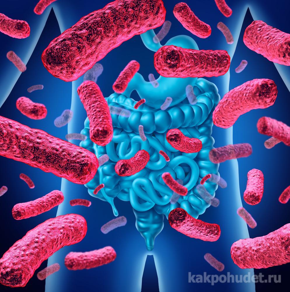 Пищевые привычки влияют на набор кишечных бактерий