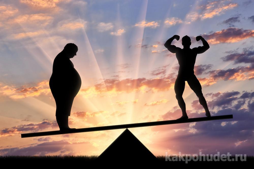 соотношение жировой и мышечной массы