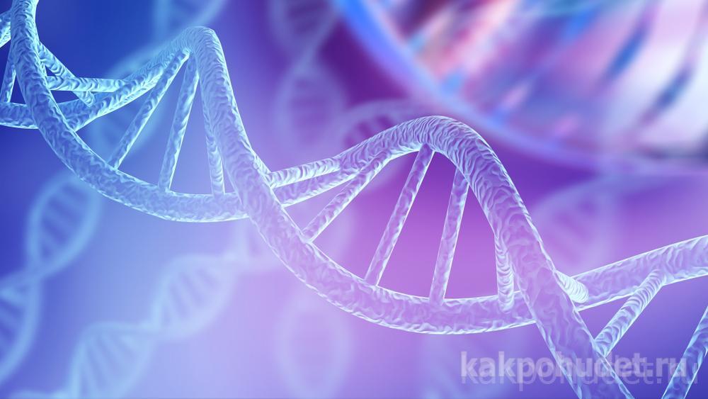 из чего состоят гены - ДНК