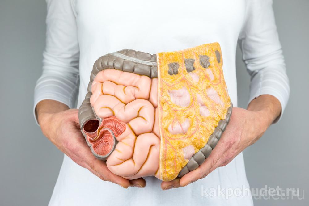 Долгий путь к пониманию функций жира